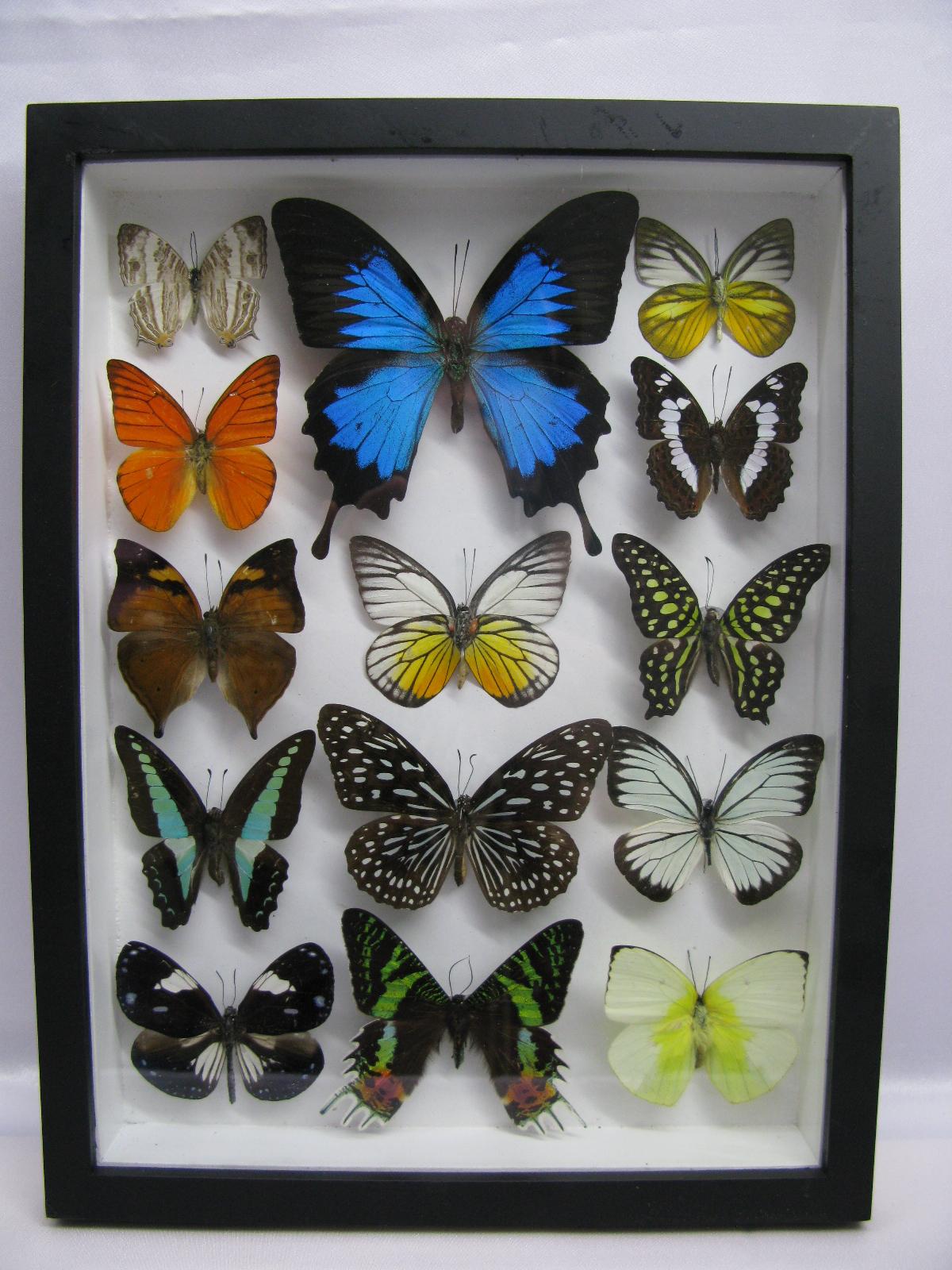 Gemütlich Echte Schmetterlinge Eingerahmt Galerie ...