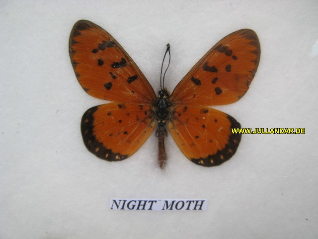 Night Moth